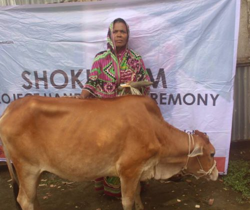 Cow Project