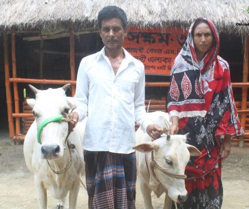 SHOKKHOM Project No 3: Cow Project